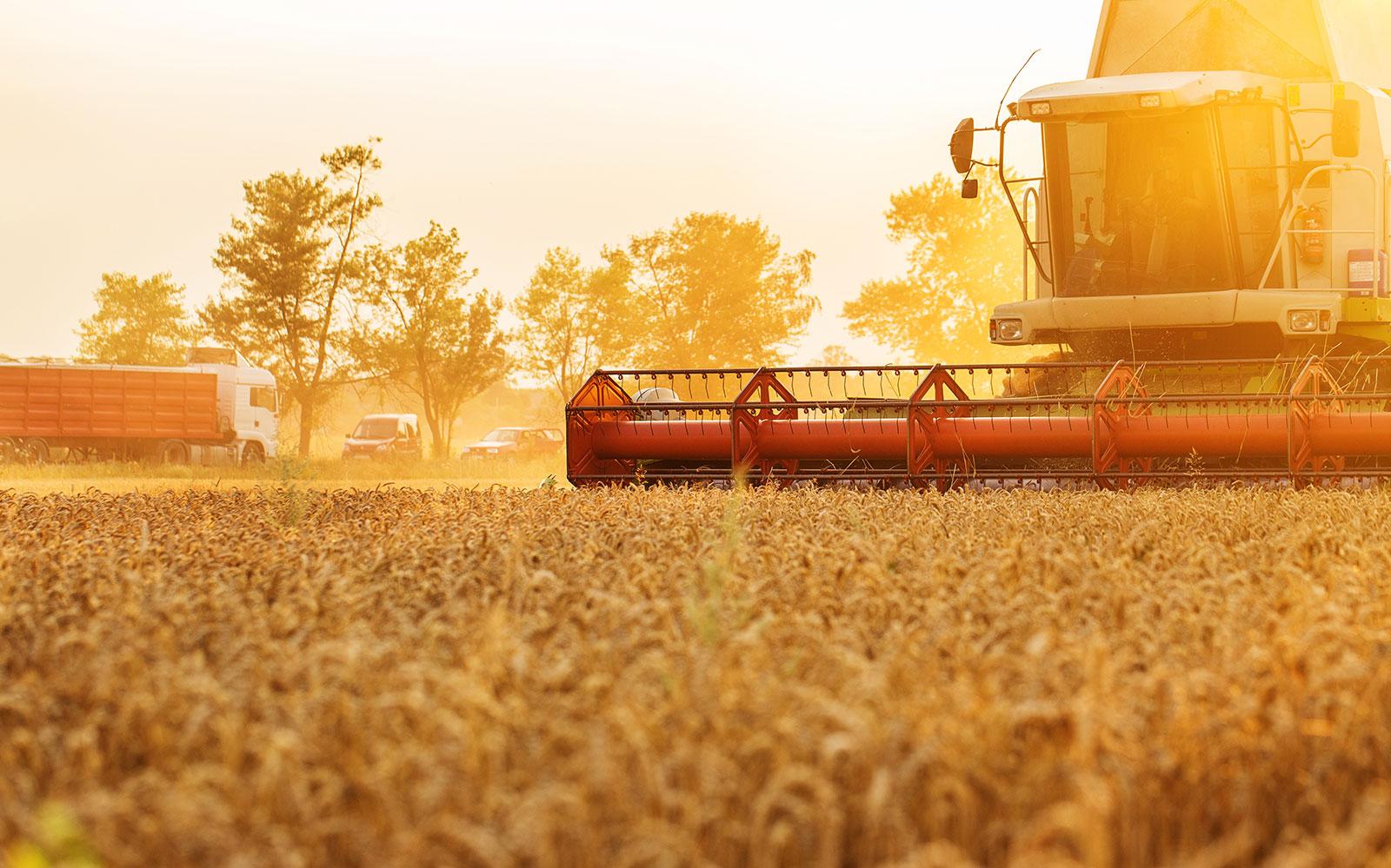 3 Seguros essenciais para o produtor rural